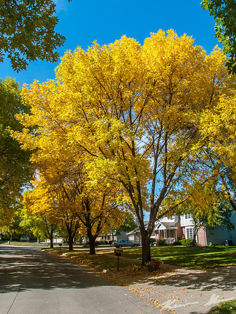 Fall colors in the neighborhood