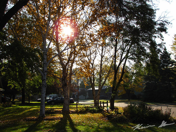 Early morning light in the front yard