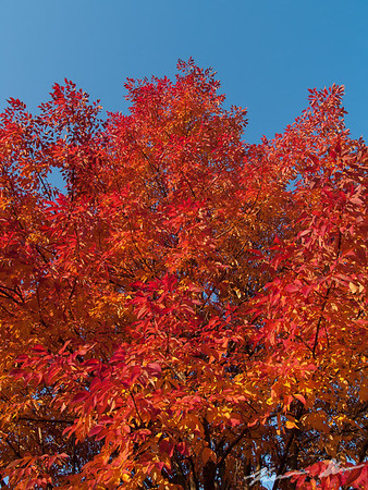 Blazing fall colors around the NWS office at sunrise