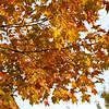 Fall colors light up the backyard