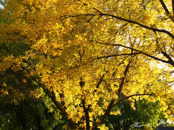 Fall colors in the neighborhoods surrounding UND