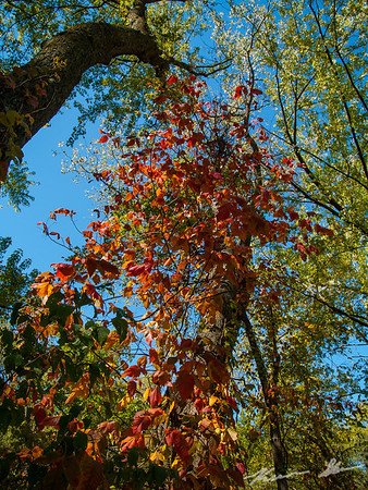 Fall colors along a mountain bike trail