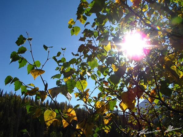 Fall colors and warm sunshine along Sixmile River