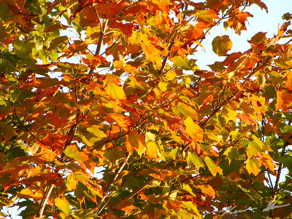 Brilliant early fall colors