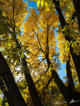 Fall colors in the neighborhood