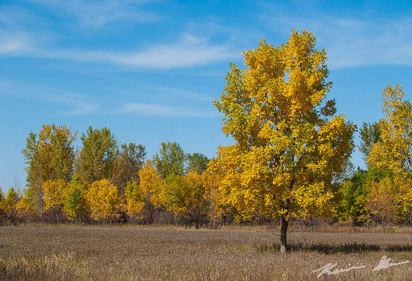 Fall colors in the Beaver Creek Park