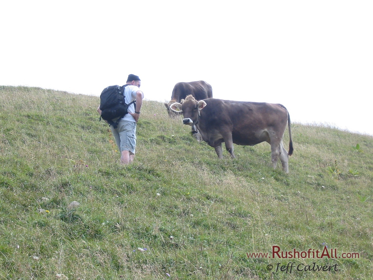 Keith and the cows at Zipfelsalpe.