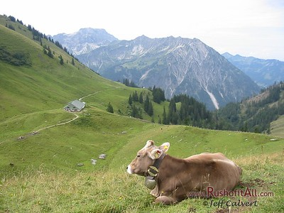 Cows (Brown Swiss?) at Zipfelsalpe.