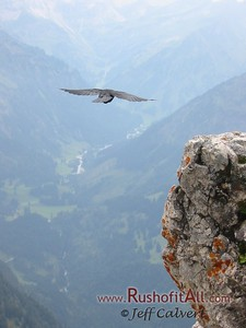 View SSW from Ponten summit, with Alpine chough in flight.