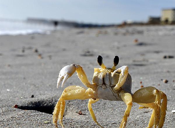 Crabby<br /> Cocoa Beach, Florida<br /> <br /> P262