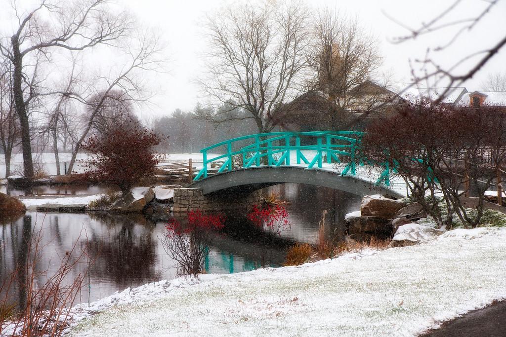 Snowy day at Cox Arboretum