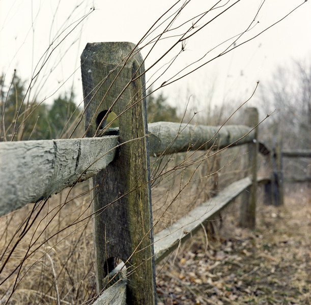 At Germantown Metro Park  Minolta Autocord Kodak Porta 400