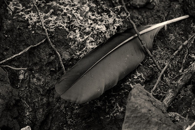 The unknown Feather