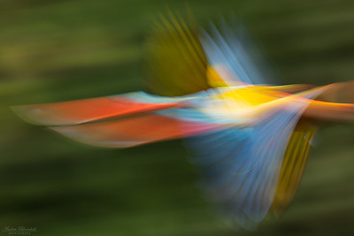Abstract Scarlet Macaw