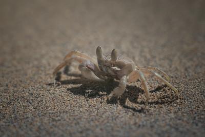 Oh, crab