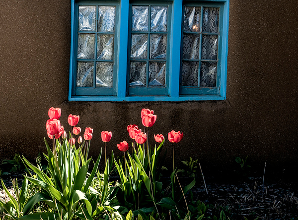 Window with tulips #1