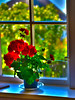 Window with geranium #11<br /> Gross Zicker, Germany<br /> <br /> P358
