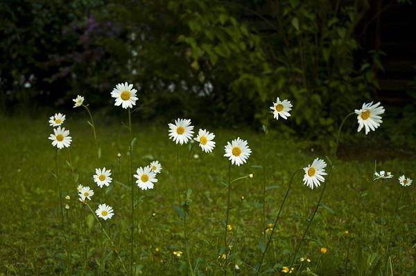 In Gabi's Garden<br /> <br /> P304