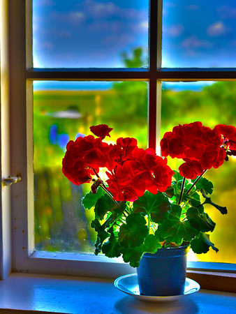Window with geranium #12<br /> Gross Zicker, Germany<br /> <br /> P359