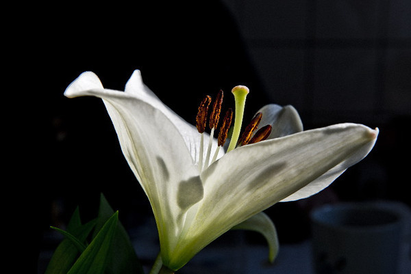 Lily #1<br /> <br /> P318