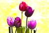 Spring silk #2<br /> <br /> P333
