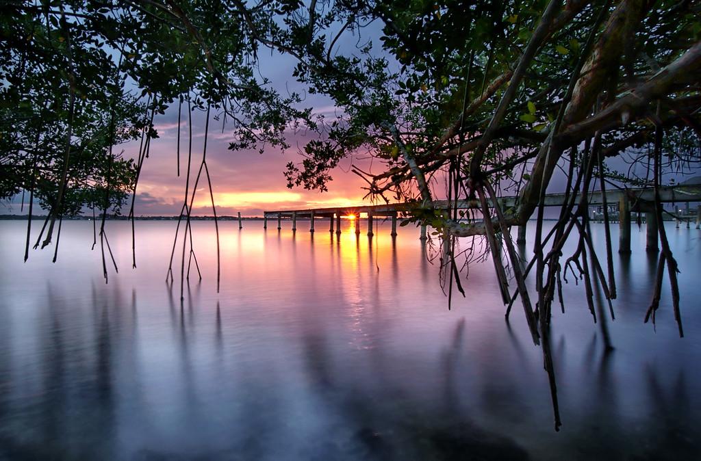 Among the mangroves.