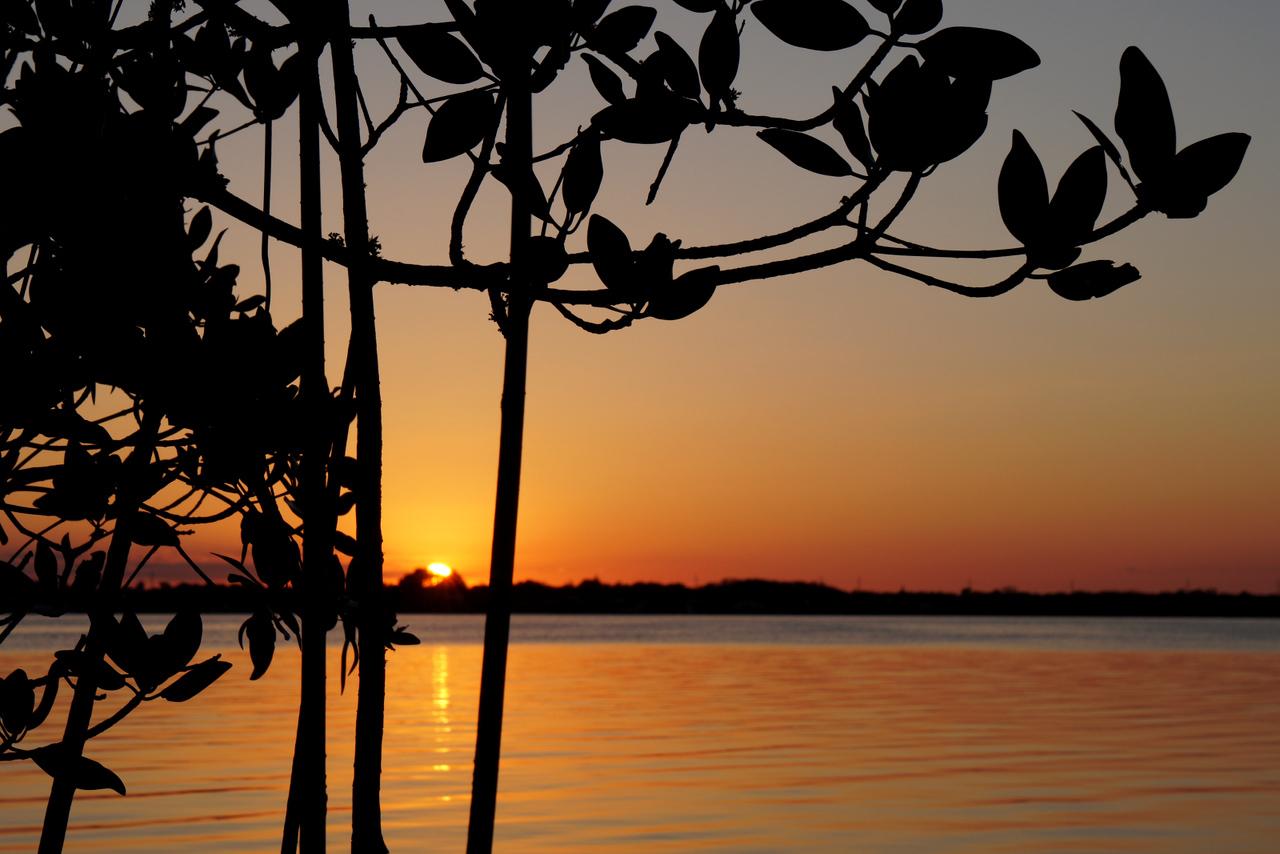 Setting sun through mangroves.
