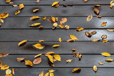 Leaves on Boardwalk
