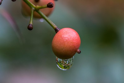 Water Droplet on Berry