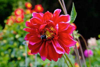 FB-BG-180804-0002 Dalia Garden
