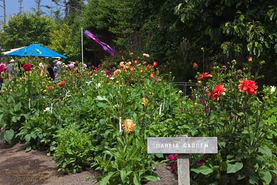FB-BG-180804-0012 Dalia Garden