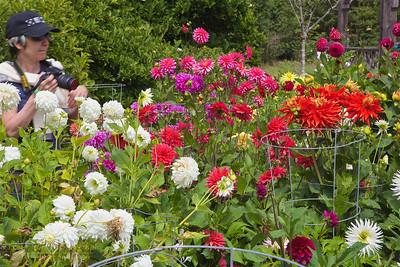 FB-BG-180804-0017 Dalia Garden