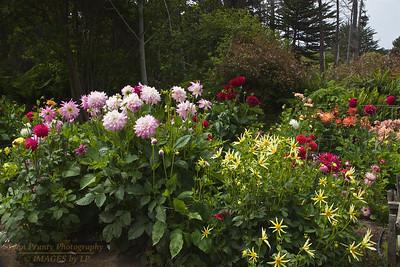 FB-BG-180804-0016 Dalia Garden
