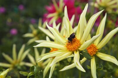 FB-BG-180804-0003 Dalia Garden