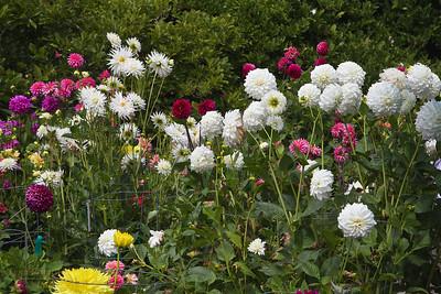 FB-BG-180804-0013 Dalia Garden
