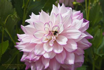 FB-BG-180804-0004 Dalia Garden