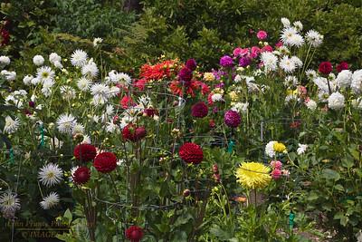 FB-BG-180804-0014 Dalia Garden