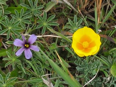 FB-130427-0003 Flowers