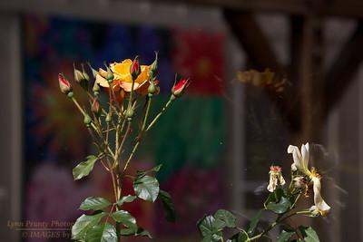 FB-130705-0005 Botanical Gardens