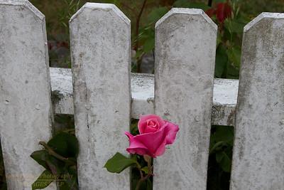 FB-120603-0004 Flower
