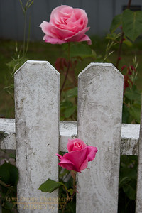 FB-120603-0003 Flower