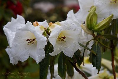FB-130227-0001 Flower
