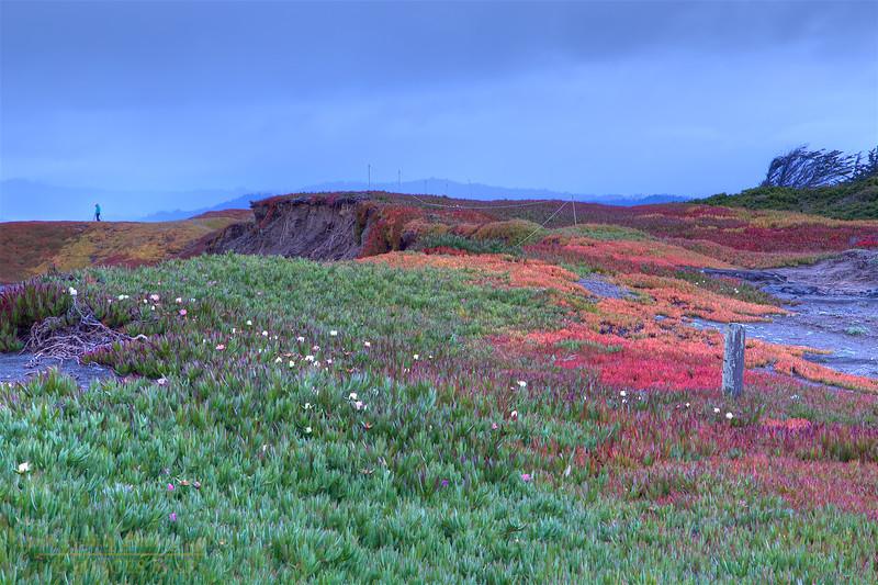 FB-180316-0008<br /> Bright Colored Ice Plant