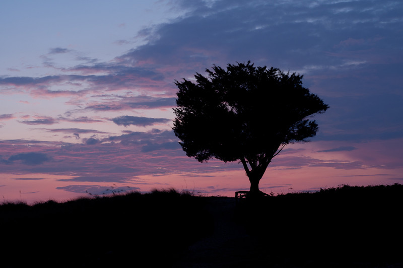 Lone tree at sunrise, Fort Fisher<br /> best print size - 8x12 or 12x18