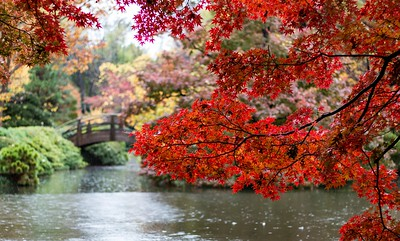 Autumn Leaves Japanese Gardens