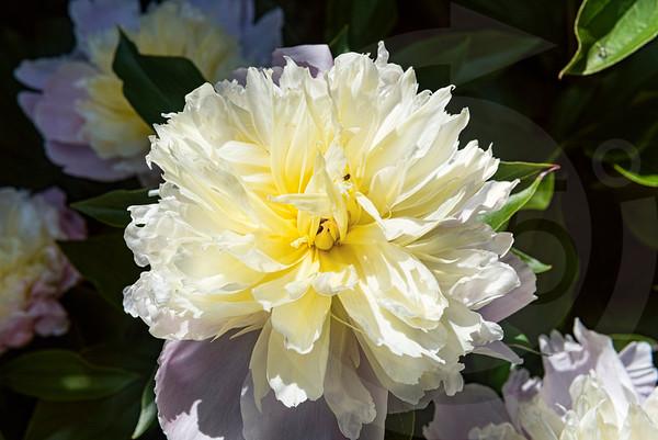 Franklin_Flowers_0645