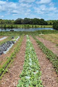 Franklin_Burnell Farms_0131