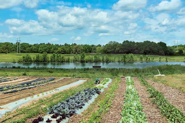 Franklin_Burnell Farms_0134