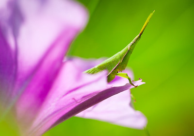 Grasshopper sitting in a flower