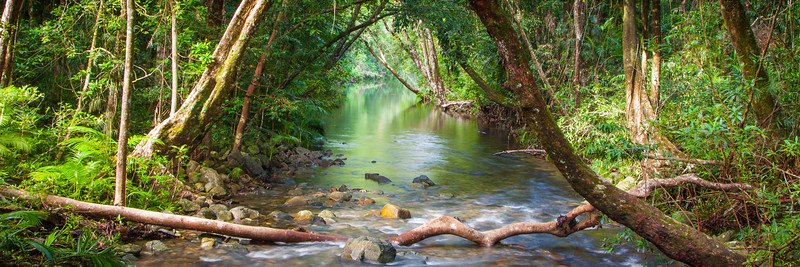 A rainforest creek in Daintree, North Queensland, Australia